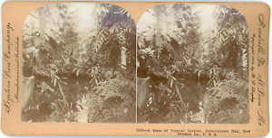 Stereo-Keystone-View-Company-B-L-Singley-A-Maze-of-Tropical-Verdure-Hortic