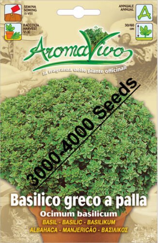 3500-4000 seeds Best Quality Very Fresh seeds Basil Herb Seeds Basilic