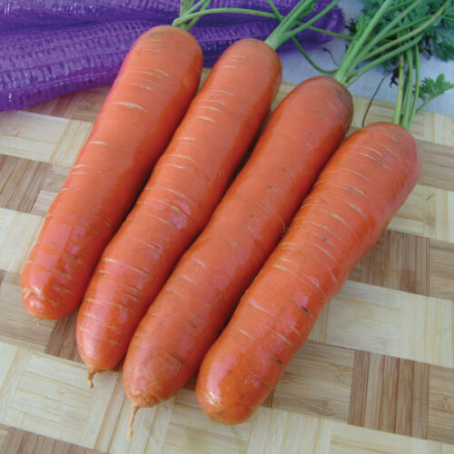 Carrot Marion F1-500 Seeds Kings Seeds