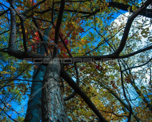 100 Digital Photos of Trees Forest Leafs Nature Landscape Fall Winter Autumn