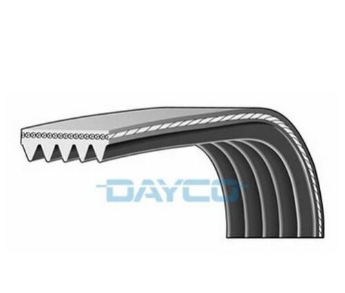 Dayco Poly V-Cintura a costine 5pk968 5 nervature 968mm Ventola Ausiliaria Alternatore
