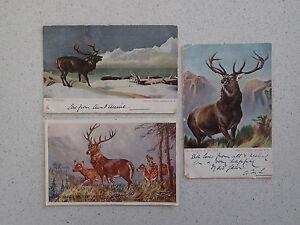 3-Vintage-Postcard-of-Deers-with-Stamps-203-205