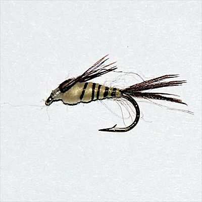 6 Pack BROWN Tungsten Bead Fly Fishing Perdigon Nymph Grayling and Trout