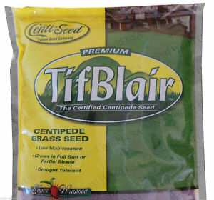 Image Is Loading Tifblair Centipede Gr Seed 1 2 Lb