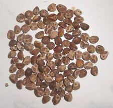 10000 semi Hawaiian woodrose Argyreia nervosa LEGNO ROSE baby woodrose