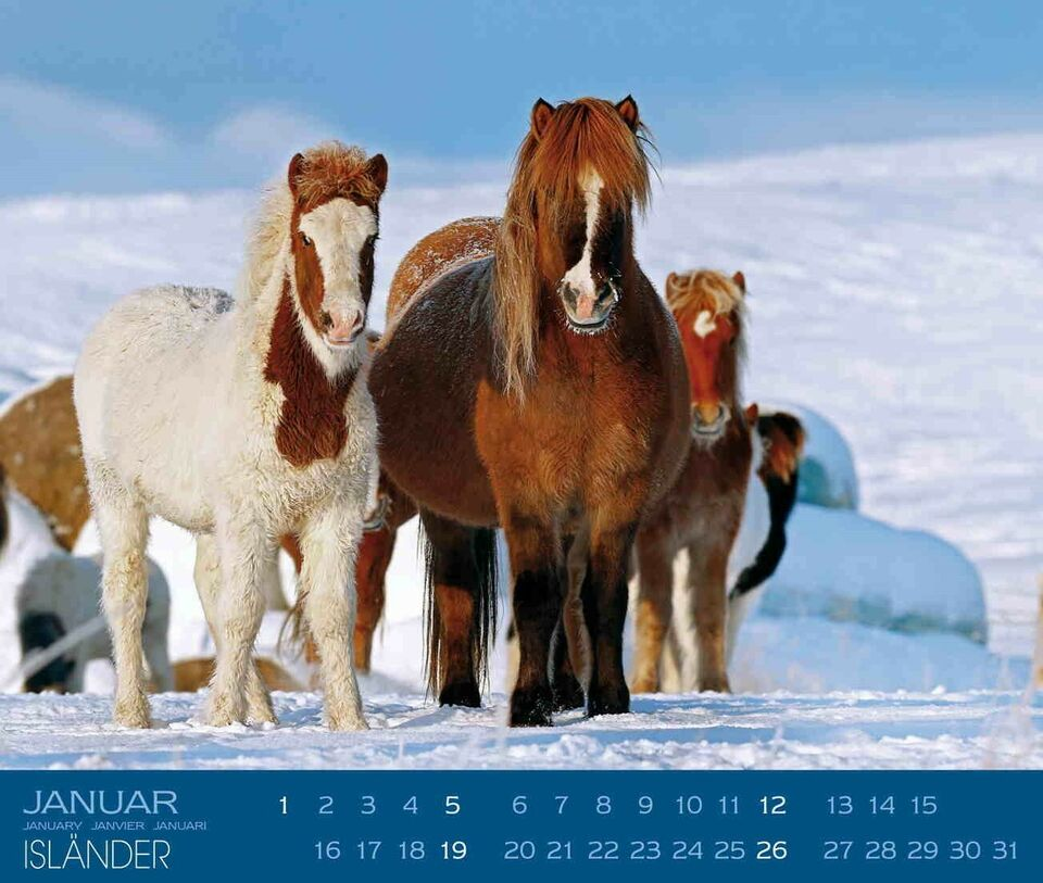 Andet, Islandske heste / fotokalender 2021