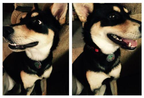 Game of Thrones Greyjoy Blue custom pet tag dog cat