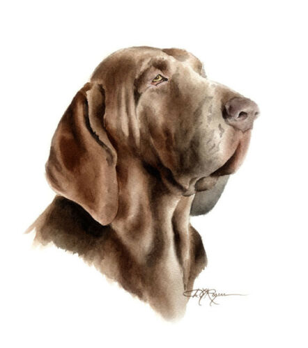 BRACCO ITALIANO DOG Watercolor 8 x 10 ART Print by Artist DJR