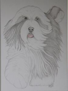 Bearded-Collie-Original-Drawing-or-Print