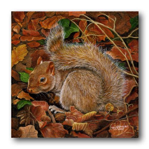 Fine Art Squirrel Father/'s Day Card Ref eb285 British wildlife animal