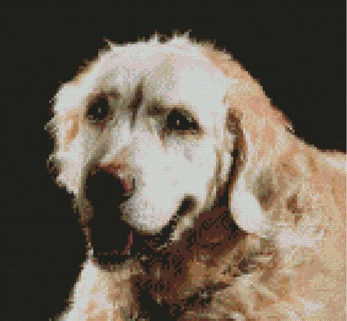 "25.5 x 24cm Free P/&P Golden Retriever  Puppy Counted CrossStitch Kit 10/"" x 9/"""