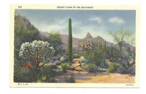 DESERT-CACTUS-Southwest-Flora-Vtg-Linen-Postcard