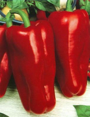 Graines Rare Chili Pepper Cherry Red Hot Chili Bio Heirloom Russe Ukraine