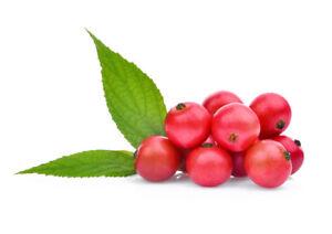 Jamaika-Kirsche-weltweit-beliebt-bekannte-Fruechte-034-ACEROLA-034-exotische-Samen