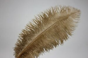 15-17 One old gold drabs ostrich feather second grade 375-420MM