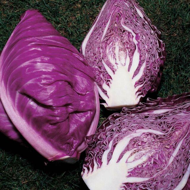 Seeds Cabbage Red Calibos Vegetable Seed Organic Heirloom Russian Ukraine