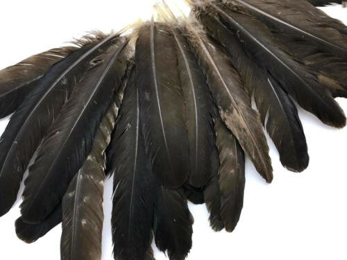 6 Pieces Natural Brown Wild Turkey Rounds Secondary Wing Quill Feathers Supply