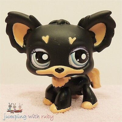 Littlest Pet Shop #1571 -Black & Brown Chihuahua Puppy Dog w/ Loveheart Markings