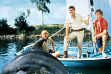 Brian Kelly As Porter Ricks And Flipper As Dolphin In Flipper 11x17 Mini Poster