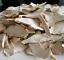 miniature 2 - Raifort-sauvage-Horseradish-racines-tranchees-flocons-Source-de-vit-C