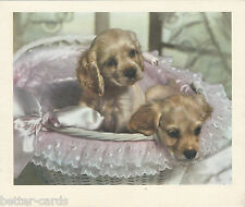 Happy Christmas Vintage 1970's Greeting Card - Merry Cocker Spaniel Puppy Dogs ~