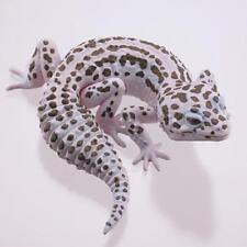Kaiyodo Museum Q White Spotted Leopard Gecko C Lizard Figure