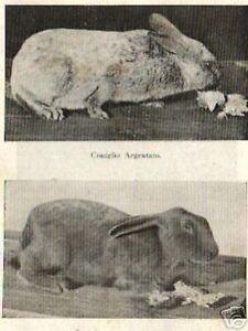 ZOOLOGIA-ZOOTECNIA-CONIGLIO-ALLEVAMENTO-RIPRODUZIONE-MALATTIE-IGIENE-CUCINA-1942