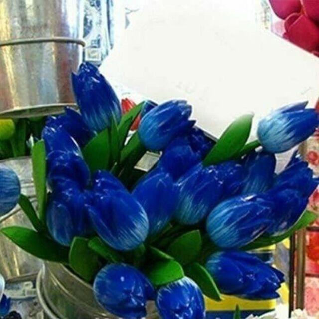 Blue Iris Flower Bulbs Perennial Impressive Resistant Fragrant Bonsai Stunning