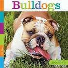 Bulldogs by Kate Riggs (Paperback / softback, 2016)