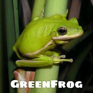 GreenFrogMerchandise