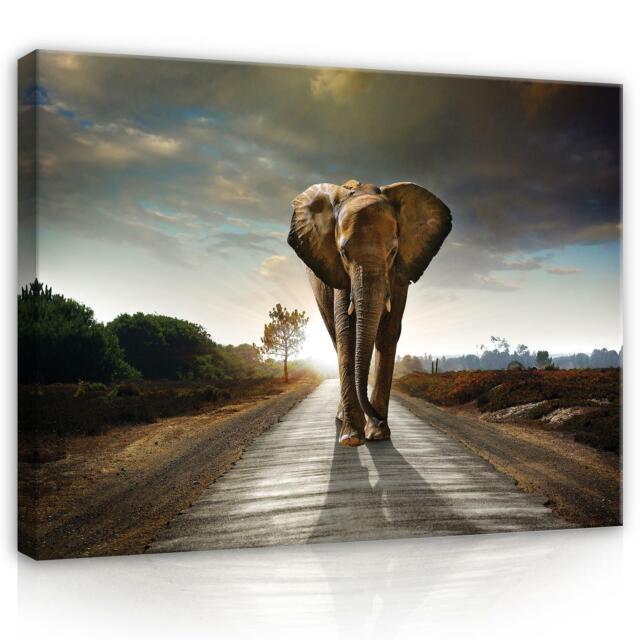 Wandbild  Leinwandbild Kunstdruck 166308FW Elefant auf dem Baum  Tiere Fauna