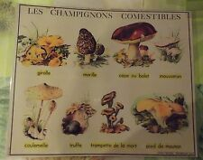 Objet de Métier Set de Table Champignons Girolle Morille Truffe Cèpe Bolet