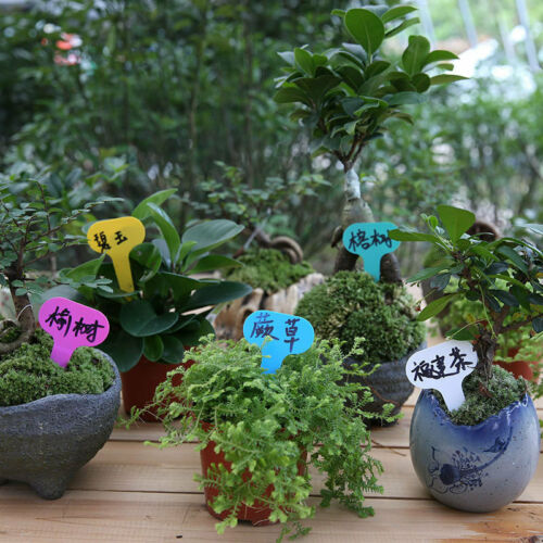50Pc Plastic Plant Labels Garden Markers T-Type Gardening Name Tags 6 Colors