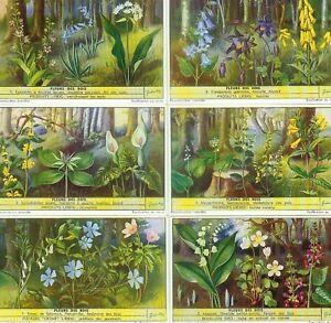 LIEBIG : S_1568 : 'Fleurs des bois