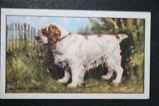 CLUMBER SPANIEL    Vintage Colour Card # VGC