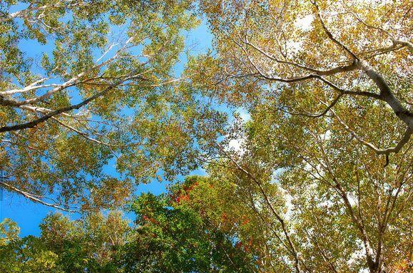 3D Blauer Himmel, Bäume 787 Fototapeten Wandbild Fototapete BildTapete FamilieDE