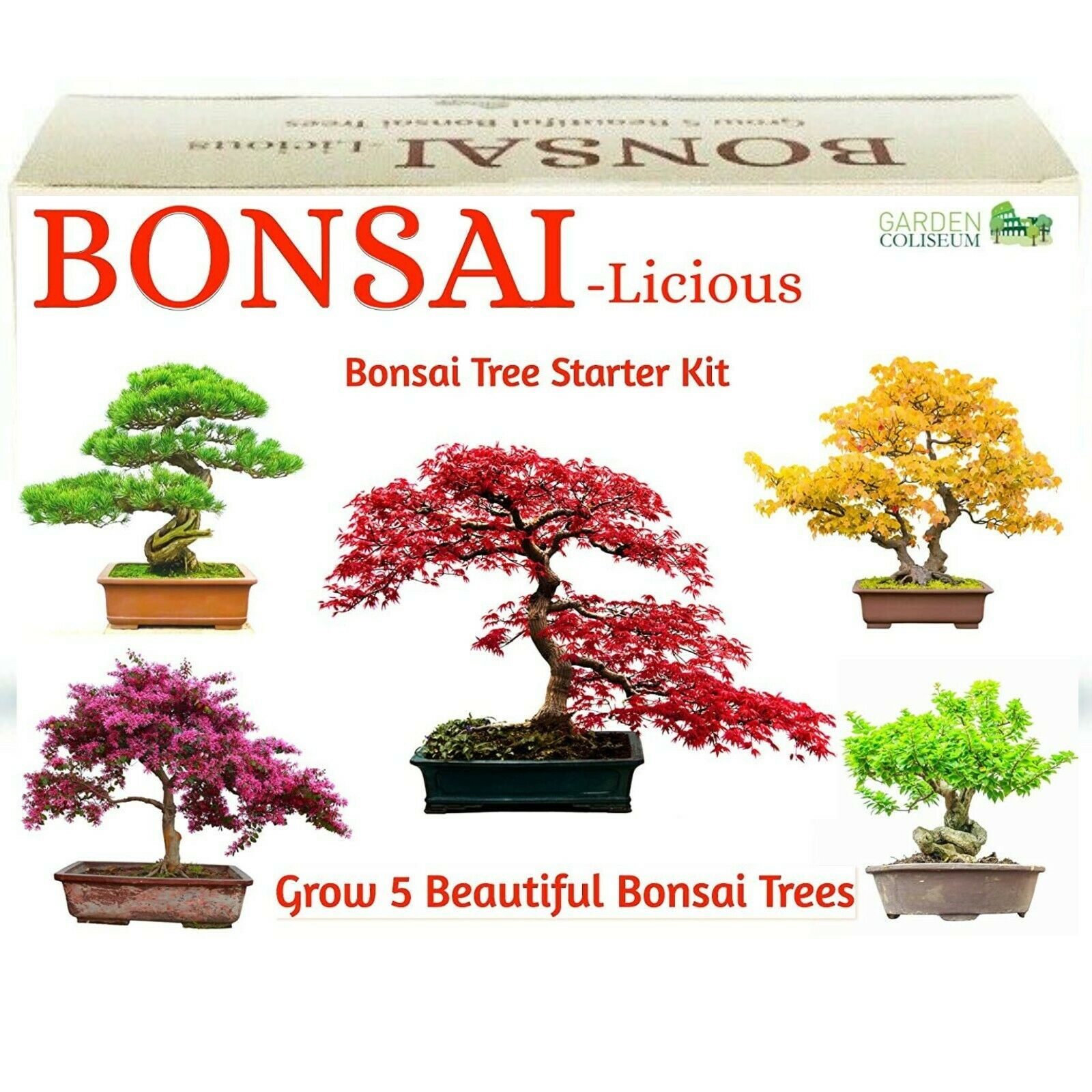 Japanese Black Pine Bonsai Tree Growing Kit Grow Bansai Trees From Seeds Gift For Sale Online Ebay