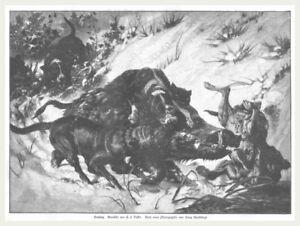 """Jäger/jagd/wildschweinjagd """"sauhatz"""" Original Holzstich Erschienen 1886 Jäger & Waidmann"""