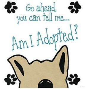 Am I Adopted Dog Funny HEAT PRESS TRANSFER for Shirt Sweatshirt Tote Fabric #998