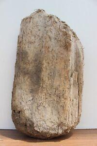 Schwemmholz Treibholz Driftwood 1 Xl Skulptur Dekoration