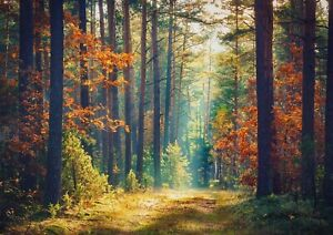 A1-Pretty-Autumn-Forest-Poster-Print-60-x-90cm-180gsm-Nature-Wall-Art-14326