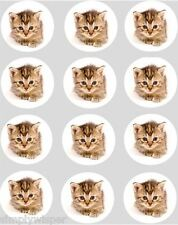 12 Tabby Kitten Cupcake Decoration Edible Rice Paper Cake Toppers Pre Cut Cat