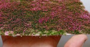 Warhammergreen-Grass-With-Magenta-Flowers-4-0-1-4in-High