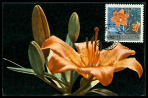 Bien éDuqué Russia Mk 1969 Flore Fleurs Lis Maximum Carte Carte Maximum Card Mc Cm H0672-afficher Le Titre D'origine