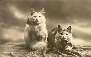 Cp-photo-fancy-cats-animals