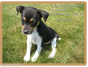 Dog Refrigerator Gift Card Insert Tool Box Magnet Cute Welsh Corgi Puppy