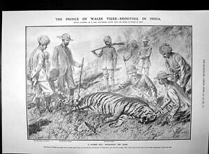 Old-Print-Prince-Wales-Tiger-Shooting-India-Balfours-Defeat-Liberal-1906-20th