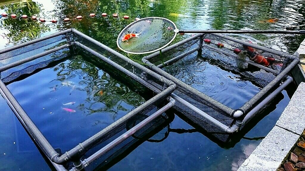 Fisch-Gehege 210cmx128cmx185cm 210cmx128cmx185cm 210cmx128cmx185cm + Springschutzrahmen, Zugnetz, Teich, Koi,Karpfen 833893