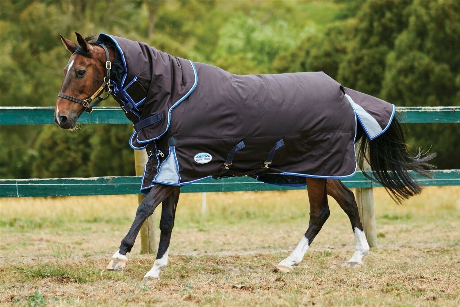 Weatherbeeta Winter Horse Blanket-Comfitec Ultra Cozi- D-A-N-Medium -69