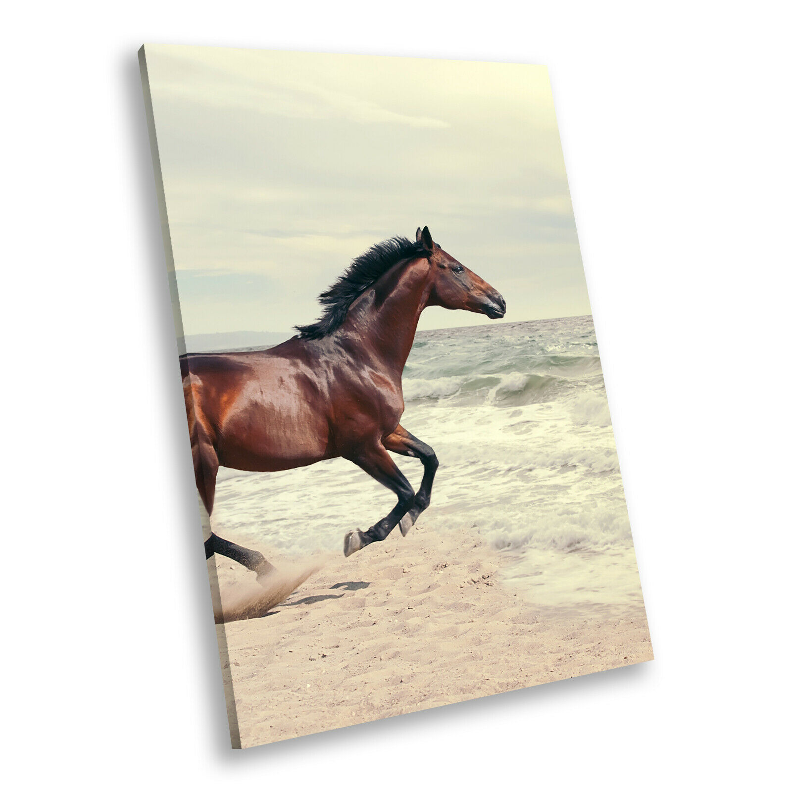 braun Horse Sea Sunset Portrait Animal Canvas Wall Art Large Picture Prints